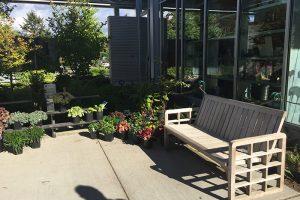 Bellevue Garden 植物園