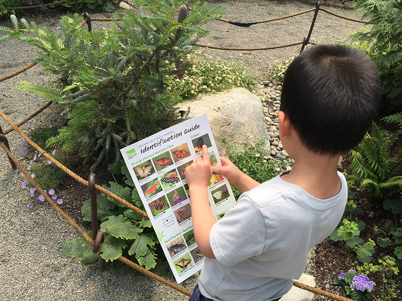 Woodland Park Zoo Butterfly Garden