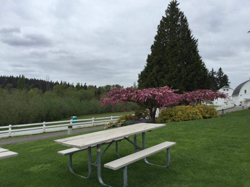 kelsey creek farm picnic area