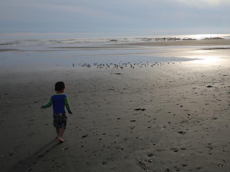 Kalaloch Beach 準備要去追 sandpipers 的小周